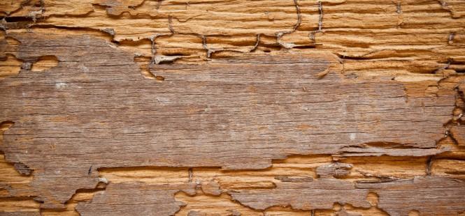 Devis traitement de bois les larves xylophages 3 devis gratuits - Abattage d arbre gratuit contre bois ...