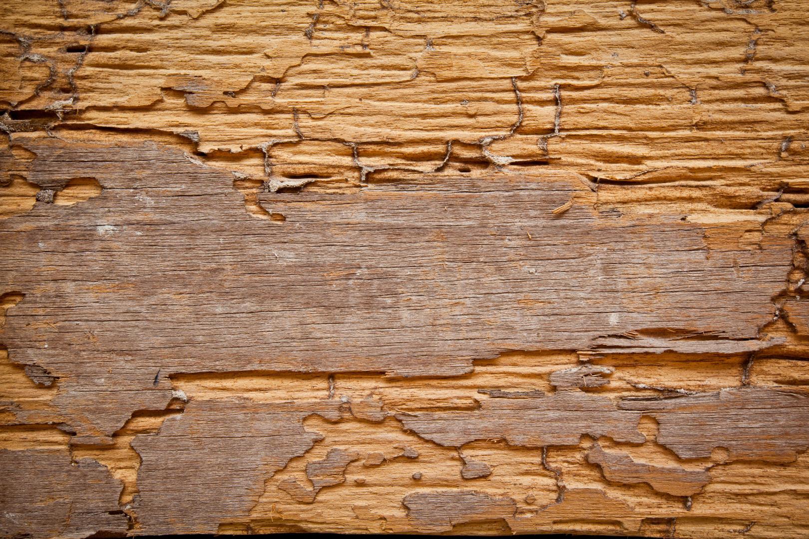 Devis traitement de bois les larves xylophages 3 devis for Vers de bois traitement